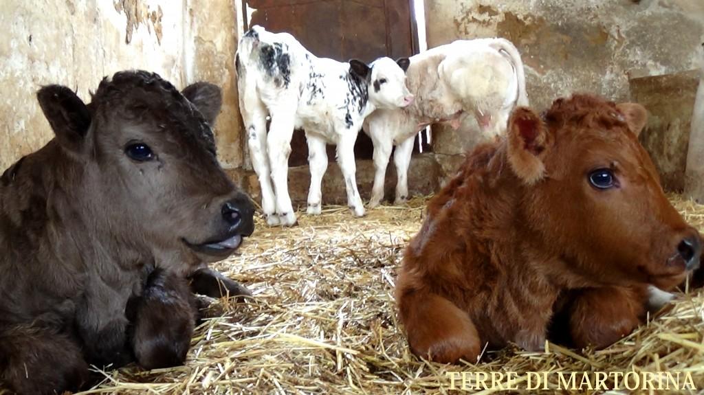 sicile agricole