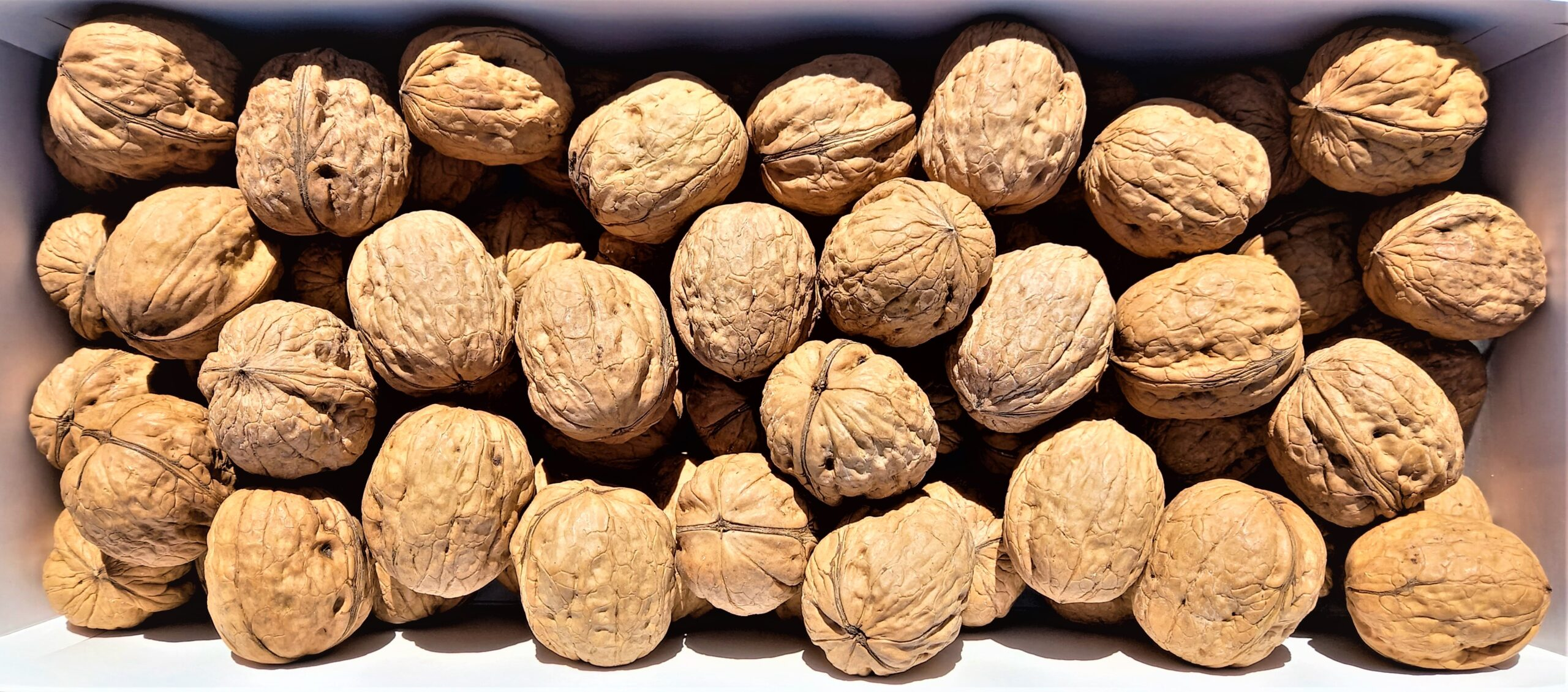 The knowledge of walnuts